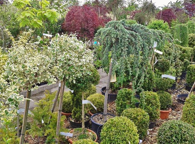 Bomen voor de renovatie van je tuin