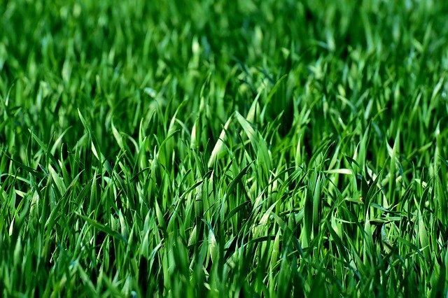 Wanneer is het hét moment om gras te zaaien